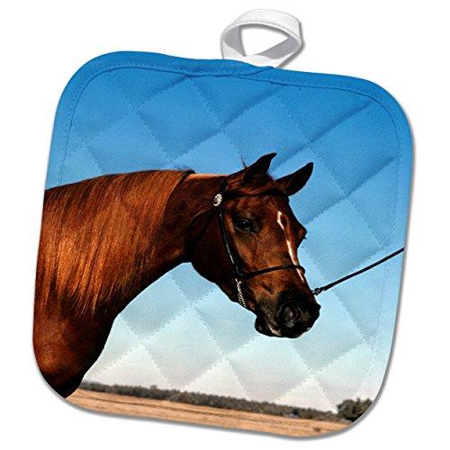 3dRose TDSwhite – Horse Equine Photos - Arabian Show Horse Pasture - 8x8 Potholder (phl_285453_1) by 3dRose