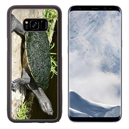 Liili Premium Samsung Galaxy S8 Plus Aluminum Backplate Bumper Snap Case IMAGE ID: 507066 Murray - Tortoise Australian