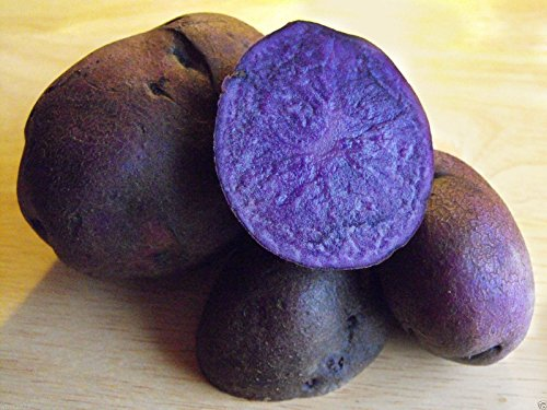 - Blue potato ,Speciality Potato, Color is retained while cooking. Excellent