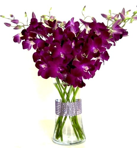 Just Orchids - Deep Purple Dendrobium with Vase by Just Orchids