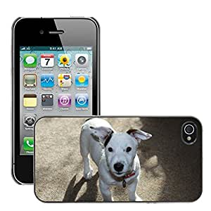Hot Style Cell Phone PC Hard Case Cover // M00108812 Russell Dog Jack Animal Puppy // Apple iPhone 4 4S 4G
