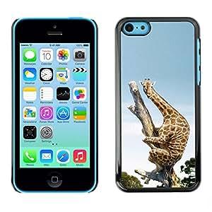 LASTONE PHONE CASE / Carcasa Funda Prima Delgada SLIM Casa Carcasa Funda Case Bandera Cover Armor Shell para Apple Iphone 5C / Funny Funny Scared Giraffe Africa