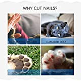 Dog Nails Clippers and Trimmer-Professional Pet