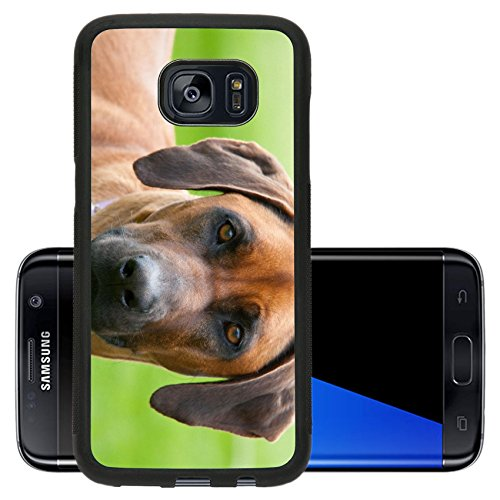 Luxlady Premium Samsung Galaxy S7 Edge Aluminum Backplate Bumper Snap Case IMAGE 19380512 A rhodesian ridgeback with an inquisitive face in - Cards Discount Gift Australia