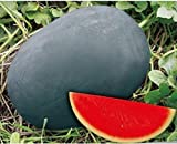 buy Dwqgroup Heirloom Gray Skin Big Long Red Sweet Seedless Watermelon Organic Seed, Professional Pack, 50 Seeds / Pack, 100% True Seed now, new 2018-2017 bestseller, review and Photo, best price $18.29