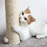Cat Scratching Posts- Adult Cat and Kitten
