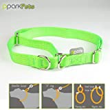 Martingale and Standard Dog Collar All-in-one – Bright Green – Medium, My Pet Supplies