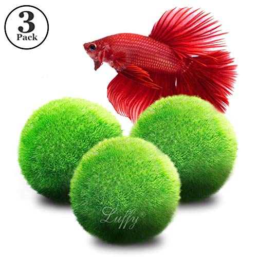 """Freshwater Aquarium Filter Best (3 Luffy Giant Marimo Moss Balls (1.5"""") : Biological, Natural, Chemical Free Filter System : Removes Nitrates : A Beautiful way to keep Fish and Aquarium Plants Healthy : No Water Change required)"""