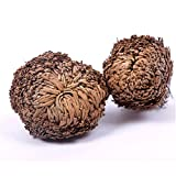 Zytho(TM) New Hot Practical Live Resurrection Plant Rose Of Jericho Dinosaur Plant Air Fern Spike Moss #61285