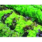 Just Seed - Lettuce Mixed - Baby Leaf - 300 Seeds - Economy Pack