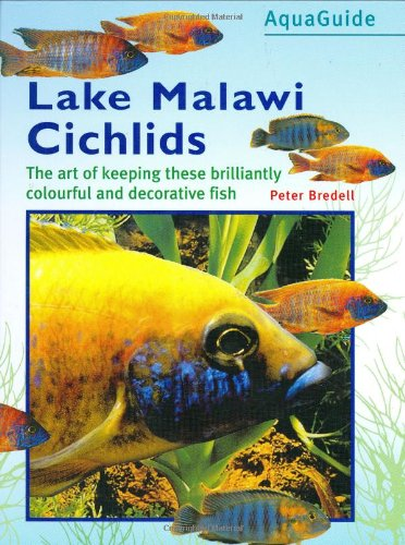 (Aquaguide S.) (Lake Malawi Cichlid)
