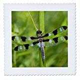 Danita Delimont - Dragonflies - Twelve-spotted Skimmer, Libellula pulchella, male, Marion Co. IL - 10x10 inch quilt square (qs_209577_1)