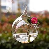 Mkono 2 Pack Wall Mount Hanging Clear Glass Vase Flower Plant Pot Terrarium Planter-Orb M
