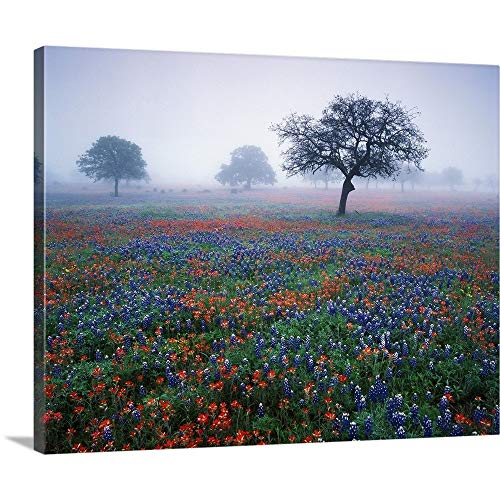 Adam Jones Solid-Faced Canvas Print Wall Art Print Entitled Texas, Hill Country, View of Texas Paintbrush and Bluebonnets at Dawn 30