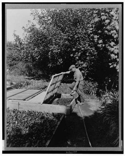 1917 Photo Gardener watering cold frame plants, posed to illustrate Rudyard Kipling's poem The Glory of the Garden Location: Newport, Rhode Island