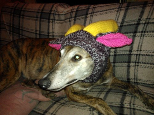 Greyhound Reindeer Hat Knitting Pattern Kindle Edition By Val
