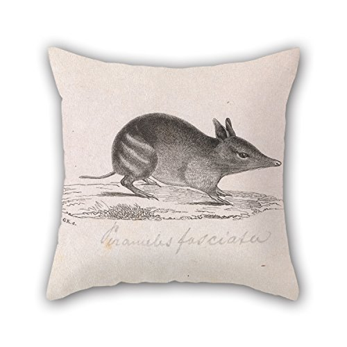 - Artistdecor 20 X 20 Inches / 50 By 50 Cm Oil Painting Gerard Krefft - Western Barred Bandicoot, Perameles Bougainville Pillow Shams ,two Sides Ornament And Gift To Floor,study Room,pub,indoor,gril F