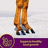 Horse Health Shur Hoof Hoof Supplement for