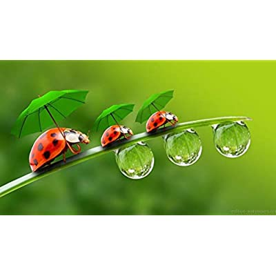 Adult 1000 Piece Jigsaw Puzzle Ladybug Umbrella Dew Drops DIY Kit Wooden Puzzle Modern Home Decor Boys Girls Unique Gift Stress Reliever: Toys & Games