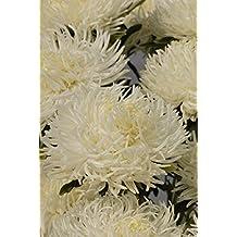 Flower Seeds Giant Aster Krallen Birma (Callistephus chinensis) Flowers