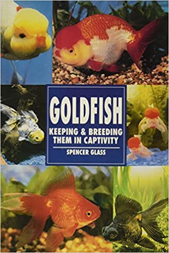 Care guide for fancy goldfish – housing, feeding, and more.