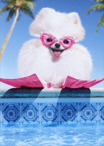 Fluffy Dog Swim Goggles Pomeranian