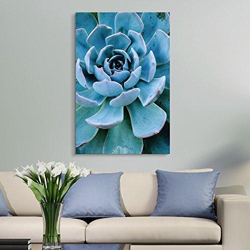 Closeup of a Blue Succulent Plant