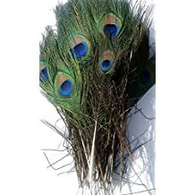 Dragonpad 100pcs High Quality Real Natural Peacock Feathers About 10-12 Inches
