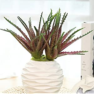 Smilela Zzooi 2PCS Natural-looking Artificial Aloe,Asparagus,AloePerryi,Suitable For:Home,Table,Wedding,Party, Meeting Room,DIY Floral Arrangment Decor. 44