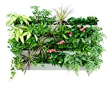 Self Watering Planter for Vertical Gardens – Indoor, Outdoor Wall Decor & Gardening Kit with Hanging Bracket - Plants Thrive with No Effort, Ideal for Busy Lifestyles - BloomWall by Savvygrow(6 Ivory)