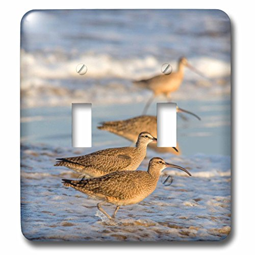 Danita Delimont - Birds - Whimbrel shorebirds foraging Pismo Beach, California, USA - Light Switch Covers - double toggle switch - Coast Pismo