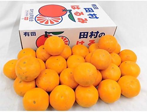柑橘 はるみ はるみみかん(不知火(デコポン)の妹分)の紹介 |松下農園