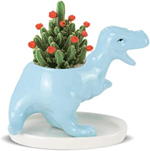Echaprey Succulent Pots with Drainage Tiny Planter Dinosaur Shape Flower Pot for Indoor Home Office Garden Decoration (Including Tray) (Blue)