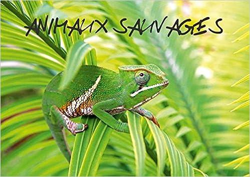 En ligne téléchargement gratuit Animaux sauvages : Rencontre avec des animaux sauvages ! pdf epub