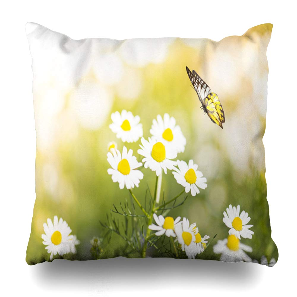 DIYCow Throw Pillow Covers Stem Blue Morning White Daisy Flower Field Butterfly Day Nature Parks Green Rose Wildflower Chamomile Home Decor Pillowcase Square Size 20 x 20 Inches Zippered Cushion Case
