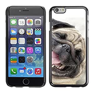Fashionable PHONE CASE / Slim Protector Hard Shell Cover Case for Apple Iphone 6 / Pug Happy Dog Pet Canine Smiling by ruishername