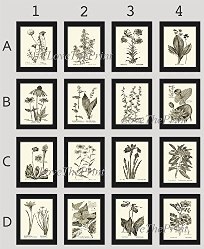 Botanical Print Set of 16 Prints Unframed Antique Coneflower Echinacea Foxglove Lady's Slipper Dandelion Iris Water Lily Lotus Aster Lily of the Valley Bellflower Rose Home Room Decor Wall Art MFS -