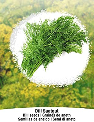 BIO/ORGANICO Eneldo - Semillas ecológicas de plantas naturales ...
