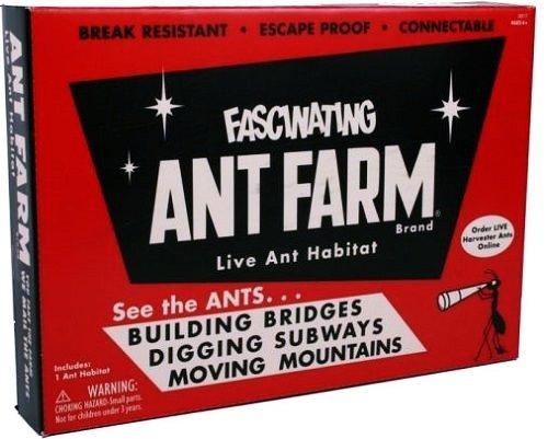 vintage ant farm - 3