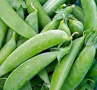 Pea Seed, Sugar Snap Pea, Heirloom, Organic, Non Gmo, 100 Seeds, Perfect Peas