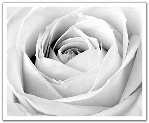 tick Removable Wall Decal Sticker Mural, La Fin du Rose Gentle Flower Black and White, 24 by 19.75-Inch (Rose Mural)