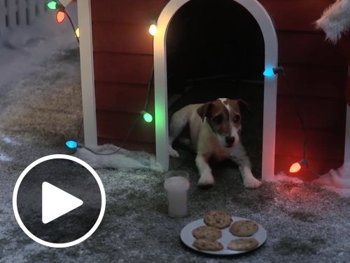 Animated Christmas Doghouse Dreams eGift Card
