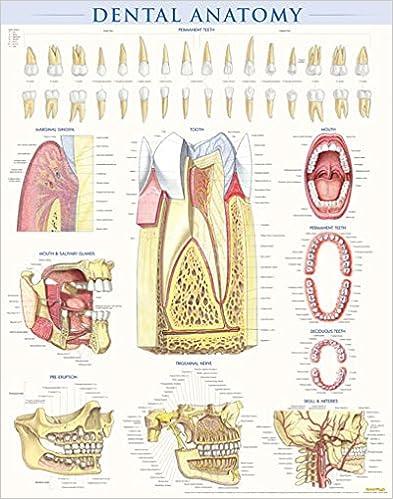 Amazon.com: Dentistry - Medicine & Health Sciences: Books: General ...
