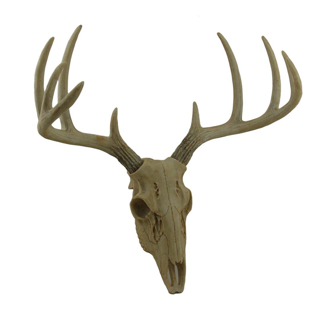 Zeckos Little Bucky Wall Mounted Faux Aged Finish 10 Point Antlers Deer Skull 15 Inch by Zeckos