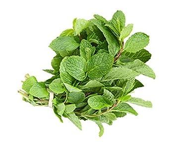 b054fdd0c77f Amazon.com   Mint Leaves   Fresh - 0.75oz bag   Grocery   Gourmet Food