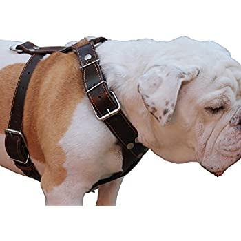 """Brown Genuine Leather Dog Harness Large. 30""""-35"""" Chest, 1.5"""" Wide Straps Pitbull, Boxer, Rottweiler"""