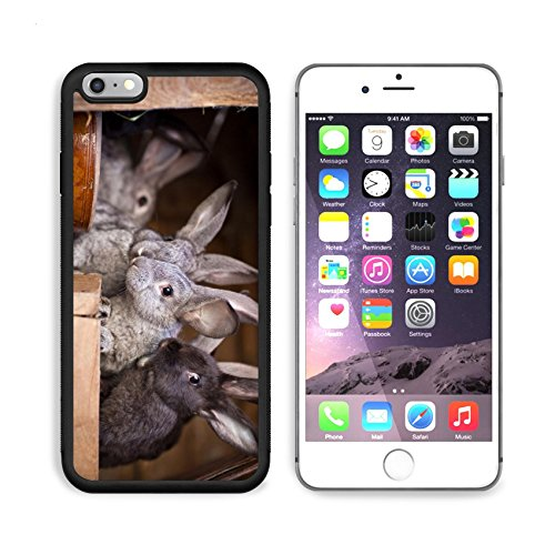 - MSD Premium Apple iPhone 6/6S Plus Aluminum Backplate Bumper Snap Case iPhone6 Plus IMAGE ID: 11533654 Young rabbits popping out of a hutch European Rabbit Oryctolagus cuniculus