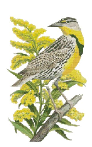Nebraska State Bird (Western Meadowlark) and Flower (Goldenrod) Counted Cross Stitch Pattern
