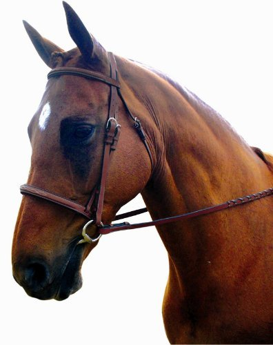Padded Bridle Raised (Kincade Raised Padded Fancy Stitched Full Bridle, Brown)