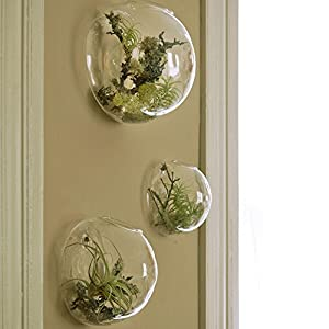 Juego de 3 macetas de pared con burbujas, terrarios, macetas de interior, jarrón de pared, mini acuario para decoración… 51MY9Z0oOxL